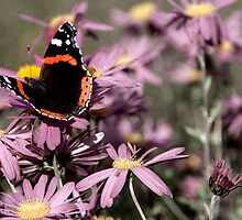 Butterfly by PJRPHOTOGRAPHY