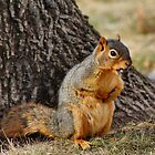 Red Squirrel in Repose by Keala