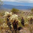 Bad Boy Cholla by Gordon  Beck