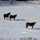 Chestnuts In The Snow by Tracy Faught