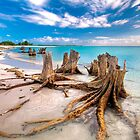Tree stump from Cuba by PoulpoZoR