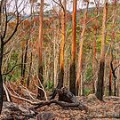 Colours Of Australia - Mount Irvine NSW - The HDR Experience by Philip Johnson