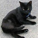 Shadow - Dark Feline by BlueMoonRose
