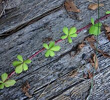 Leaves on weathered wood by wsellers