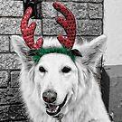 Santa's Helper by V1mage