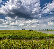 Savannah Wildlife Refuge by Bernd F. Laeschke