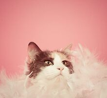 Penny Lane, Most Fabulous Kitteh by msruffles