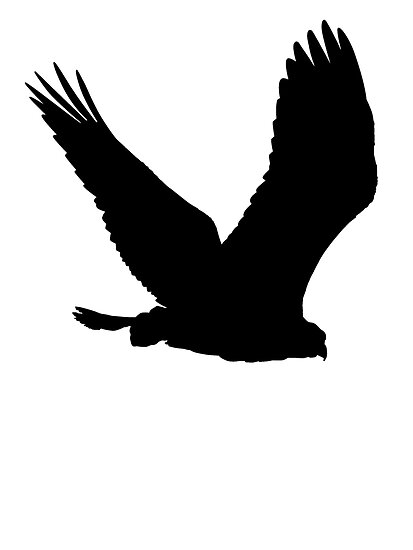 Flying Hawk Silhouette Red Tailed Hawk Silhouette Memes