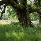 My Favourite Tree by CliveOnBeara