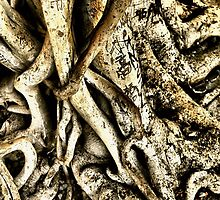 Roots  by Steve St.Amand