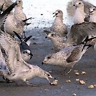 Gull Feeding Frenzy by Carol Bailey White