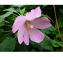 Natural beauty in an urban jungle Photographic Print