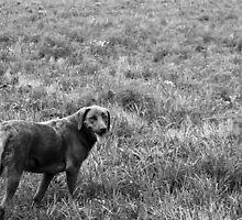 Farm Dog by Clayton Lyon
