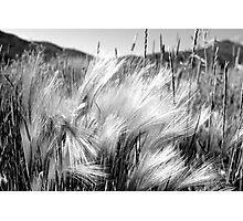 Slight Breeze Photographic Print