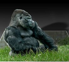 Pop-up Gorilla by mhfore