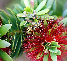 Waspy Bottle Brush by Loree McComb
