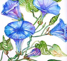 Morning Glory, Study in Blue by Maire Morrissey-Cummins