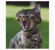 Cat Screaming by cnaccarato