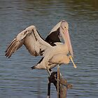 Pelican with Yellow Spoonbill move over please by Kym Bradley