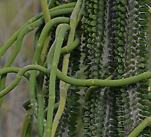 Tangled Cactus by markc54