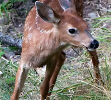 Baby Bambi....is Ready to Cut and Run by TeresaB