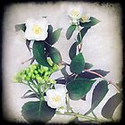 Mock Orange with Hydrangea by Clare Colins