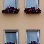Colorful windows by bandy78