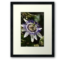 Flower-Passion fruit  Framed Print