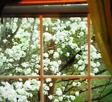 window view by Tabitha Taylor