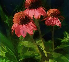 Raspberry Truffle Coneflower by moorezart