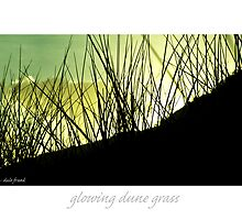 glowing dune grass by Dale Frank