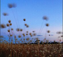 Grasses in the breeze 2 by BeninFreo