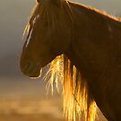 Backlit Mane by Kent Keller