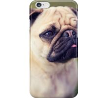 Cute Pug *PROCEEDS TO CHARITY* iPhone Case/Skin