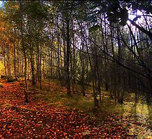 Autumn woodland walk. by Eric Said