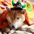 Happy Halloween…tricks or treats by malina
