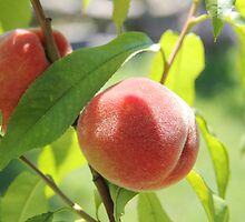 Peaches  by Rich Fletcher