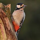 Great spotted woodpecker - I by Peter Wiggerman