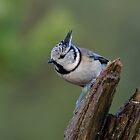 Crested tit - IV by Peter Wiggerman