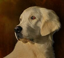 Golden retreiver portrait by Joss0ne