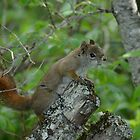 Swamp Squirrel by themanitou