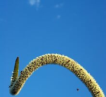 xanthorrthoea rollercoaster by GrowingWild