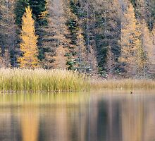 Duck on Grayling Lake by cavaroc
