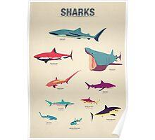 Sharks Poster