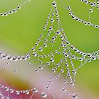 Dewy Balls by relayer51