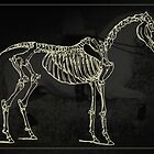 Horse Skeleton by Bine