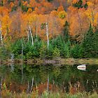 Leaf Peeping by Joseph T. Meirose IV