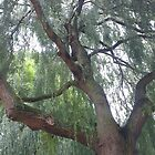 Weeping Willow  by KirstyJSwinger
