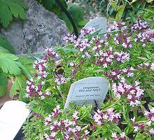 Garden Bee  by KirstyJSwinger