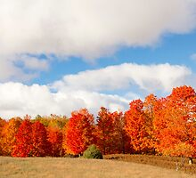 Fall - Traverse City, Michigan by Jamie Kirschner